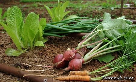 سبزیجات مناسب برای کاشت در پاییز و زمستان