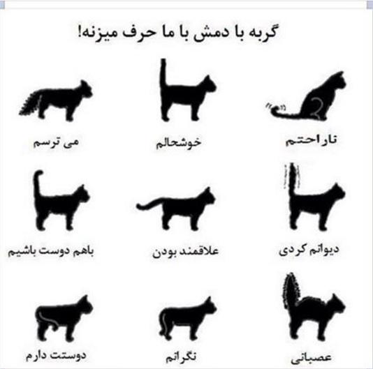 زبان بدن حیوانات