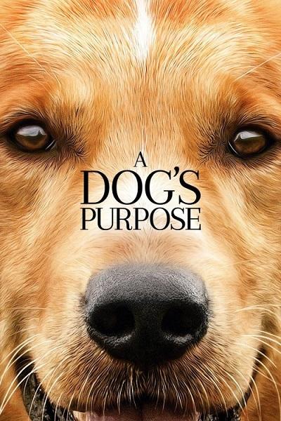 دانلود فیلم A Dog's Purpose 2017