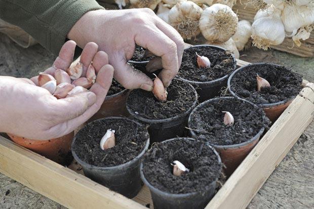 بهترین گیاهان دارویی برای پرورش در خانه