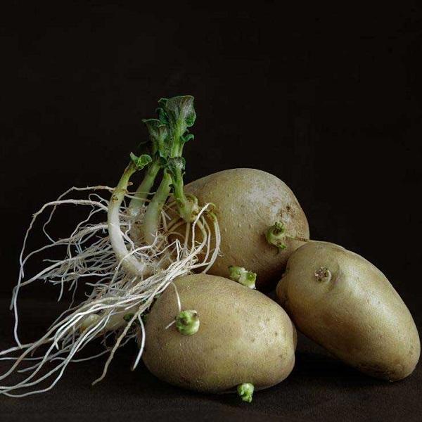 ۷ گیاهی که نباید هرگز ریشه و ساقه آن را بخورید