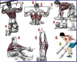 انواع حرکات تمرین بدنسازی زیر بغل