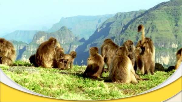 دانلود مستند زندگی پستانداران