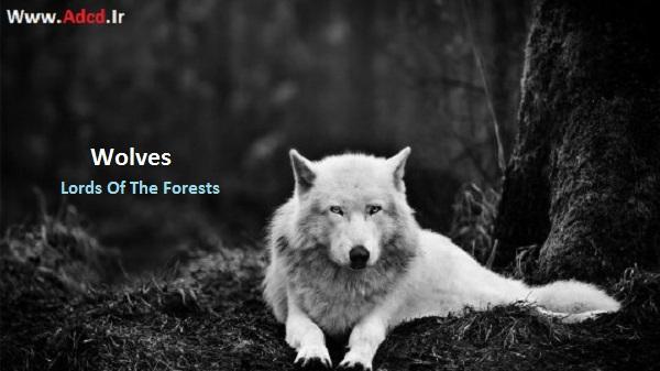 دانلود مستند گرگها