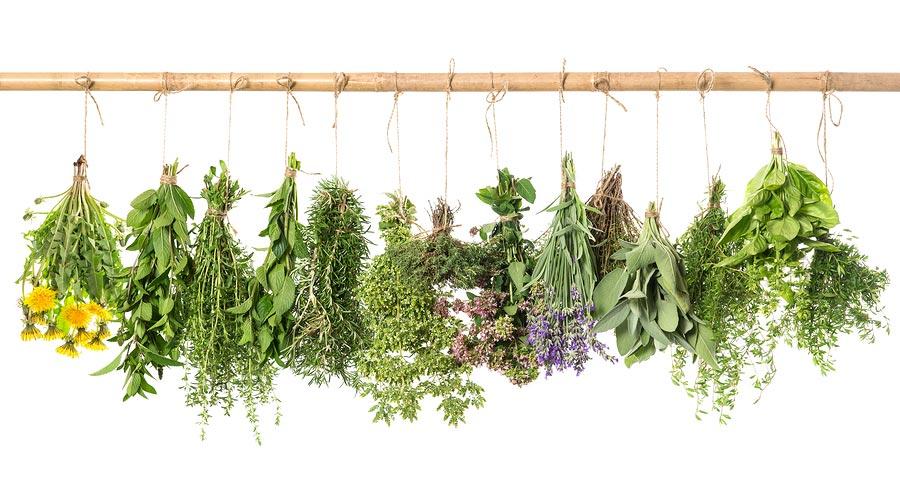 معرفی بهترین گیاهان دارویی برای لاغری و کاهش وزن