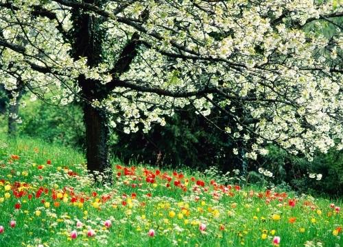 عکس فصل بهار در ایران