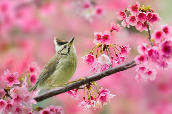 تصاویر زیبای فصل بهار