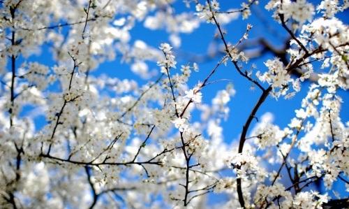 دانلود تصاویر فصل بهار