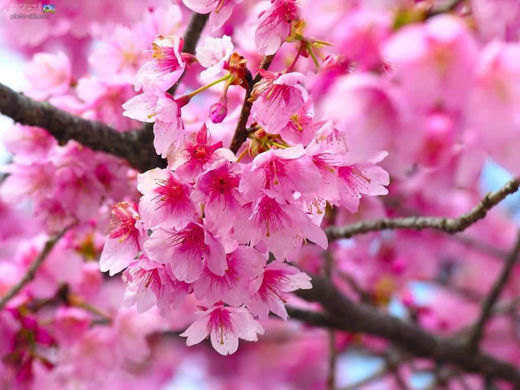تصاویری از فصل بهار