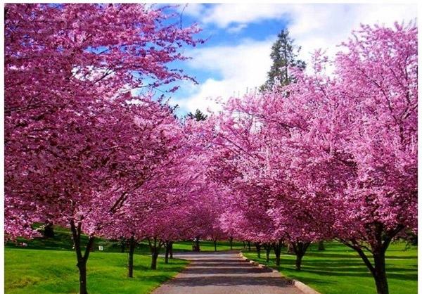 تصاویر متحرک از فصل بهار