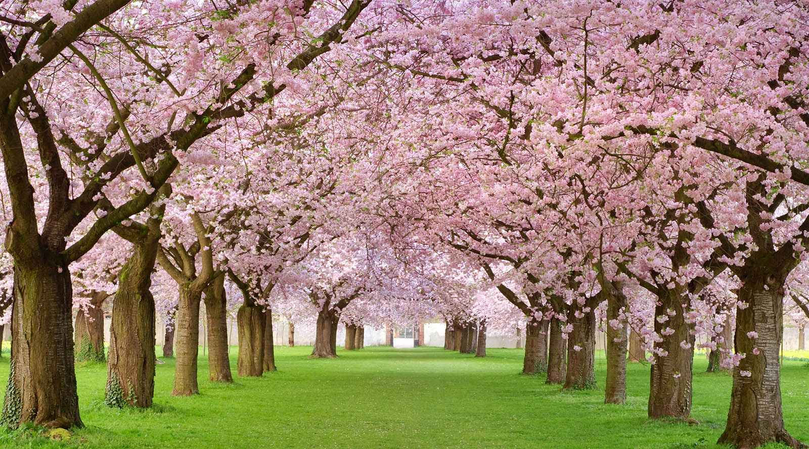 تصاویر برای فصل بهار
