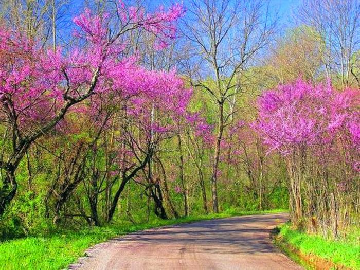 تصاویر با کیفیت از فصل بهار