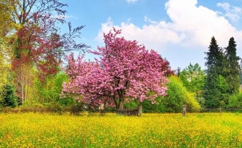 تصاویر طبیعت در فصل بهار