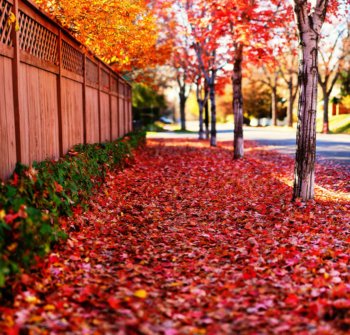 تصاویر فصل پاییزی