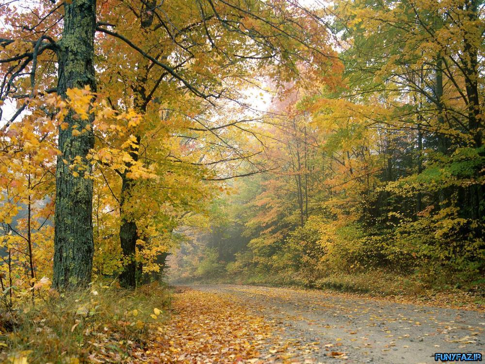 تصاویر از فصل پاییز