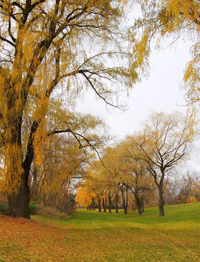 تصاویر متحرک فصل پاییز