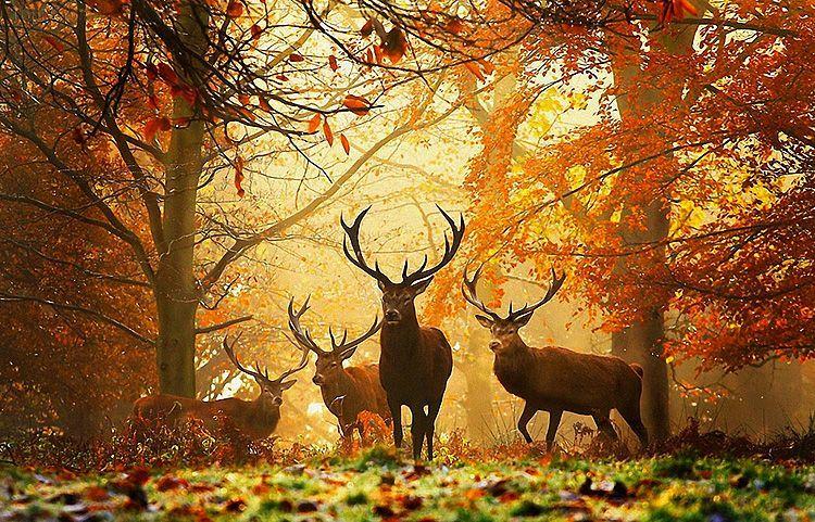 دانلود تصاویر فصل پاییز