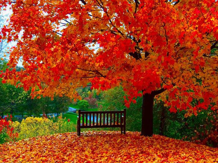 تصاویر جدید از فصل پاییز