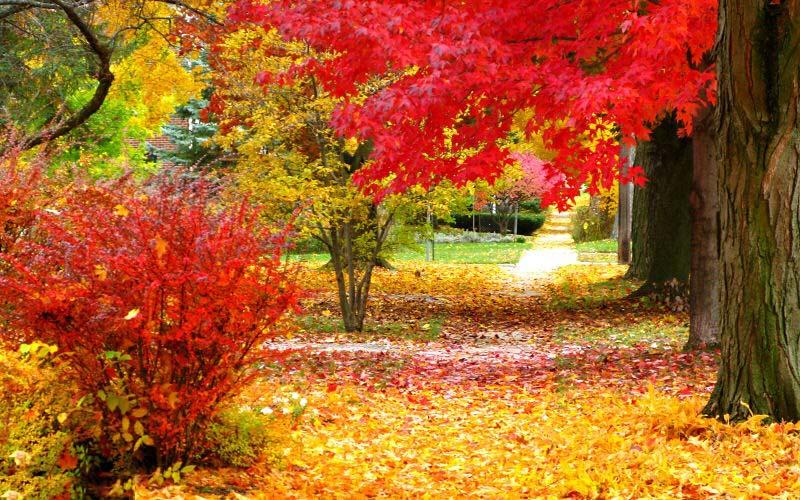 عکسهای پاییز با کیفیت hd
