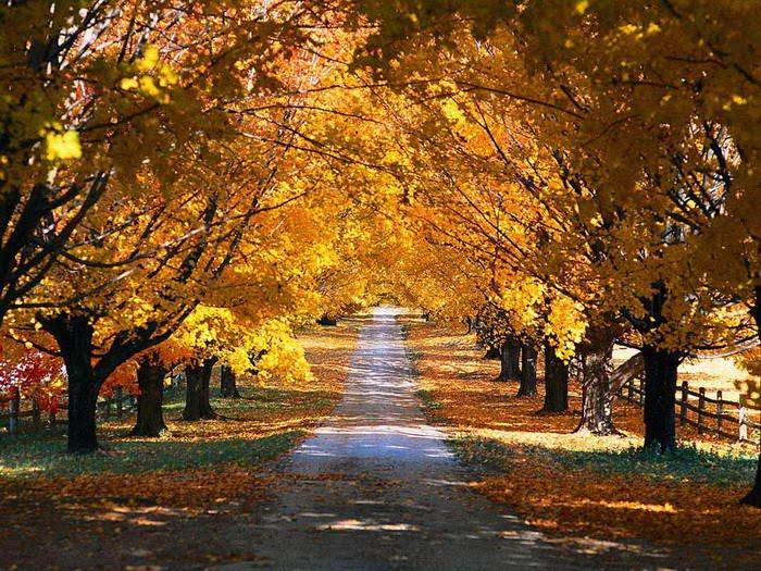 زیباترین تصاویر از فصل پاییز