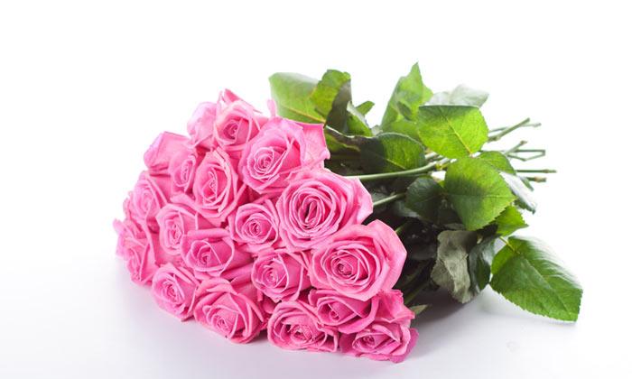 تصاویر گل های زیبا