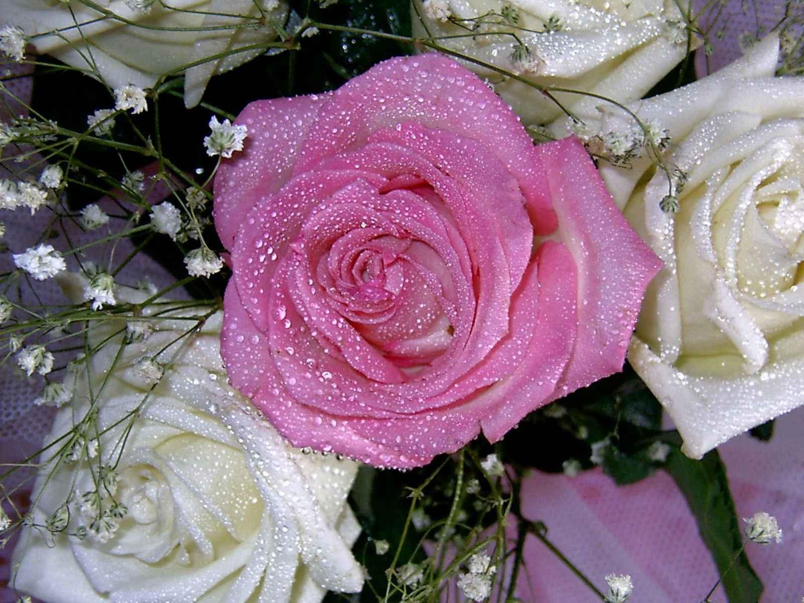 تصاویر گل های عاشقانه