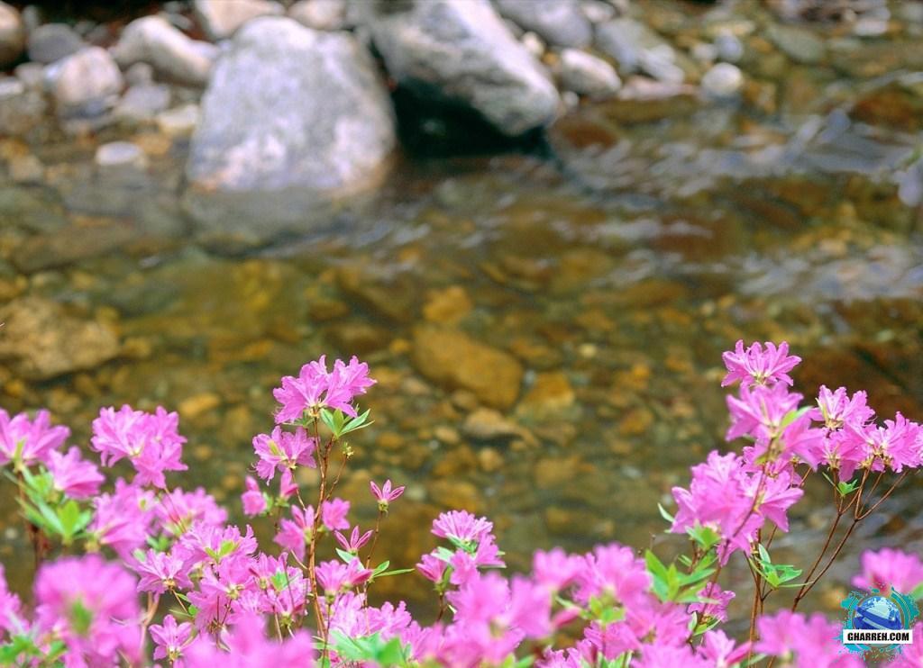 تصاویر گل های بهاری