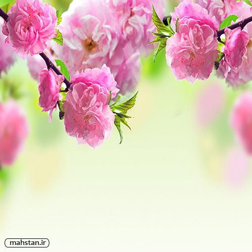 تصاویر گل های قشنگ