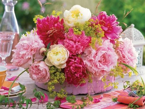 تصاویر انواع گل ها