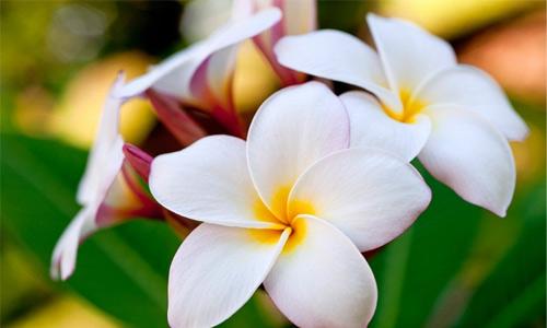 تصاویر با کیفیت از گل ها