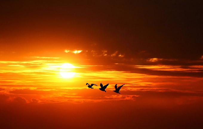 تصاویر از غروب آفتاب