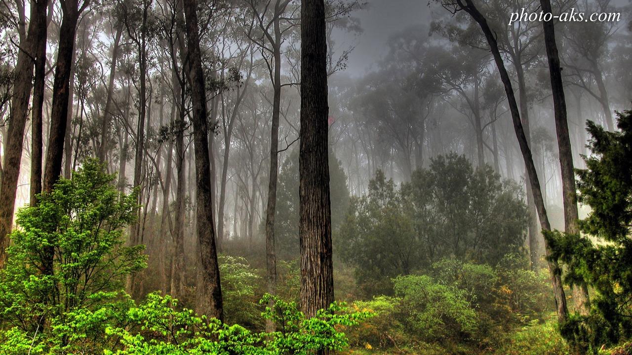 عکس درخت جنگلی
