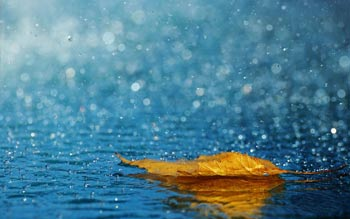 تصاویر باران اسیدی