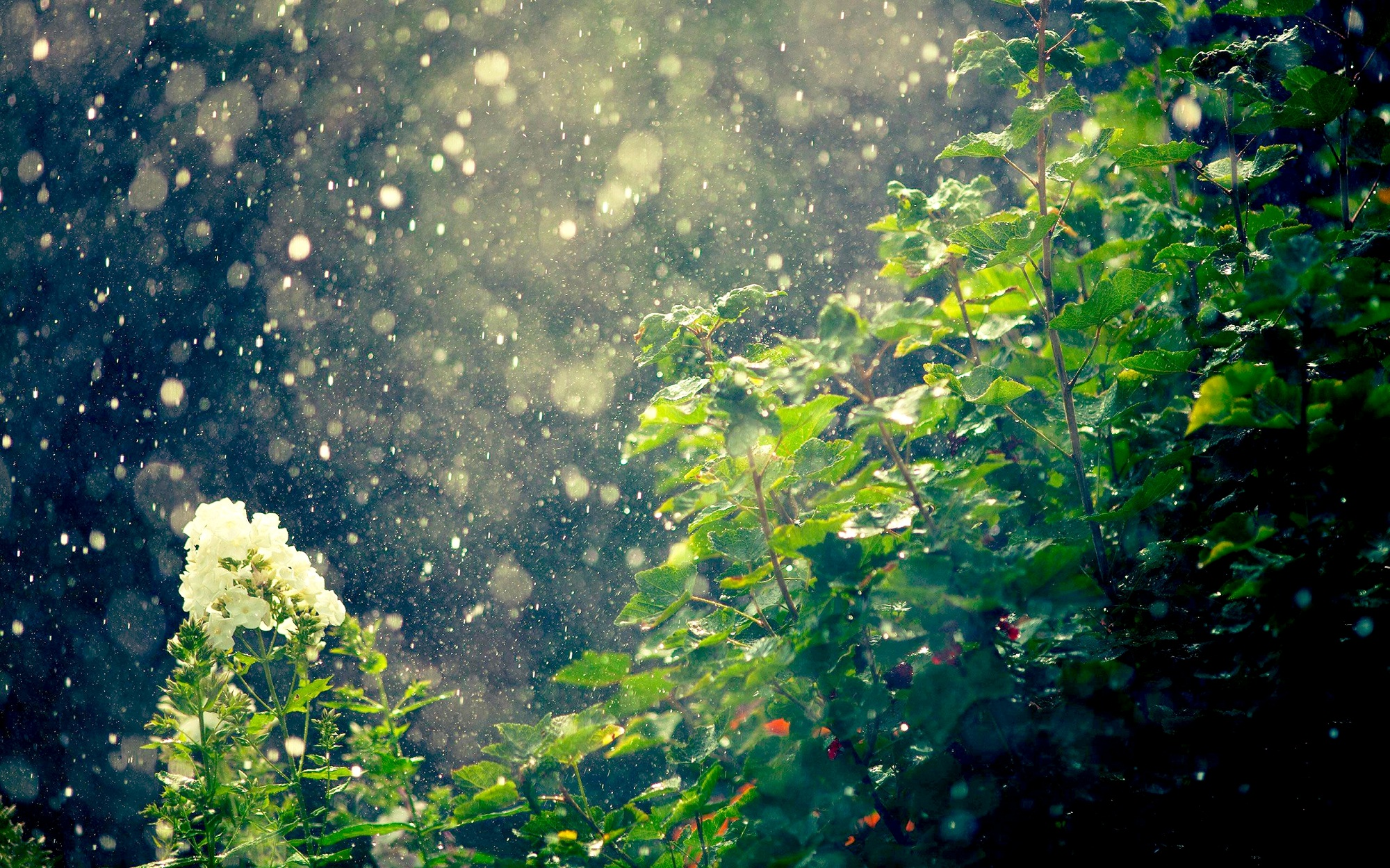 عکس باران اچ دی