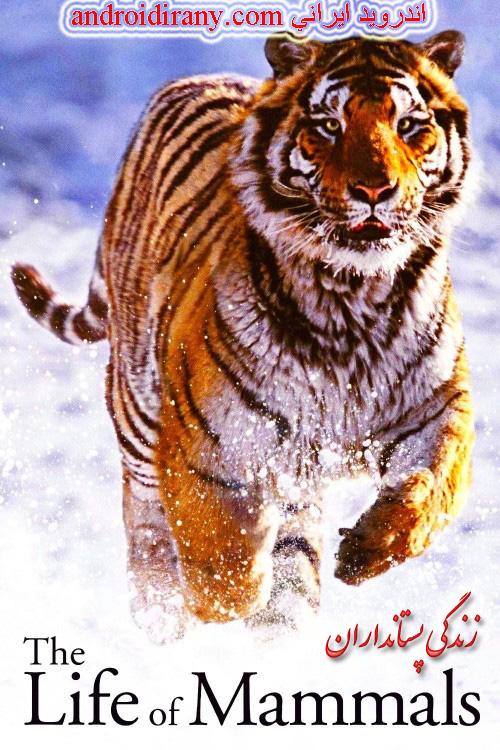 دانلود مستند سریالی دوبله فارسی زندگی پستانداران The Life of Mammals