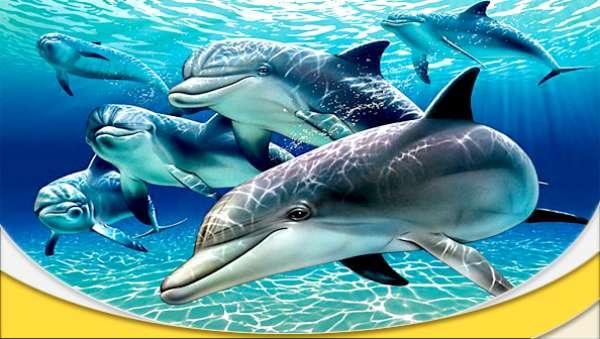 دانلود مستند یک جاسوس در گروه دلفین ها