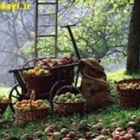 حکم خوردن میوه از باغ مردم!