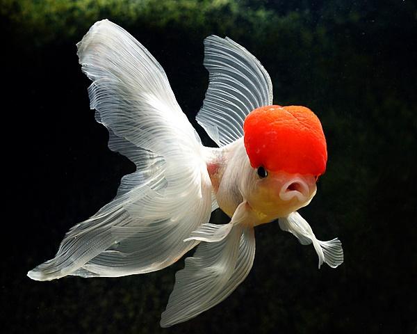 ماهی...