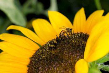 گیاهان دفع کننده زنبور های عسل کدامند؟