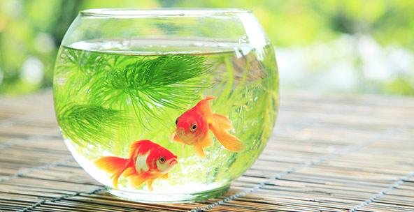 خرید و تشخیص سلامت ماهی