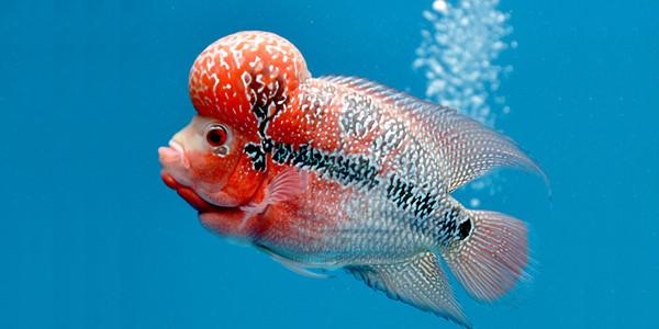 راه اندازی انجمن ماهی من