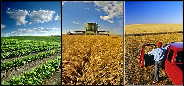 نقش تجارت الکترونیک در بازاریابی محصولات کشاورزی