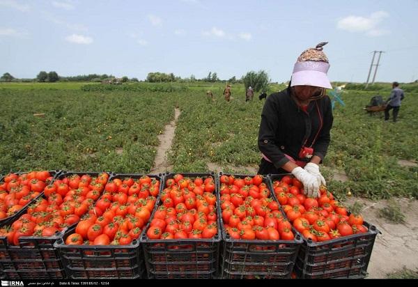 تعریف کشاورزی ارگانیک