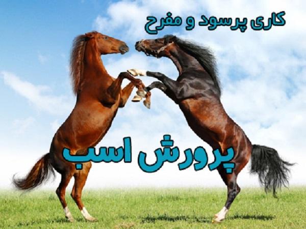 سرمایهگذاری در کسبوکار پرورش اسب