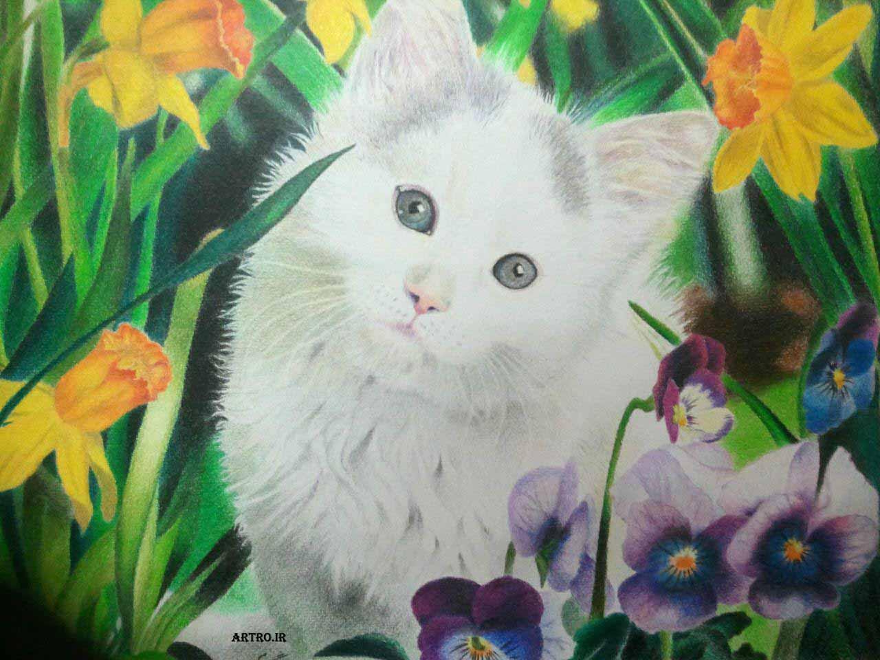 مدل نقاشی مداد رنگی گربه