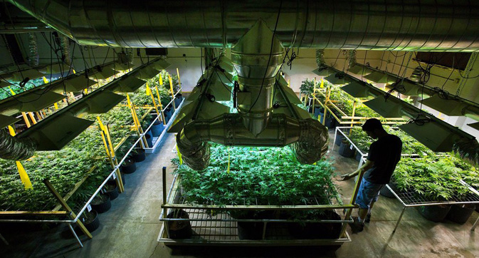 How Cannabis Production is Becoming More High-Tech