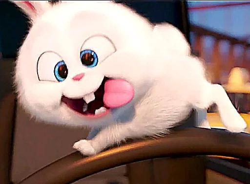 استیکر های تلگرام خرگوش
