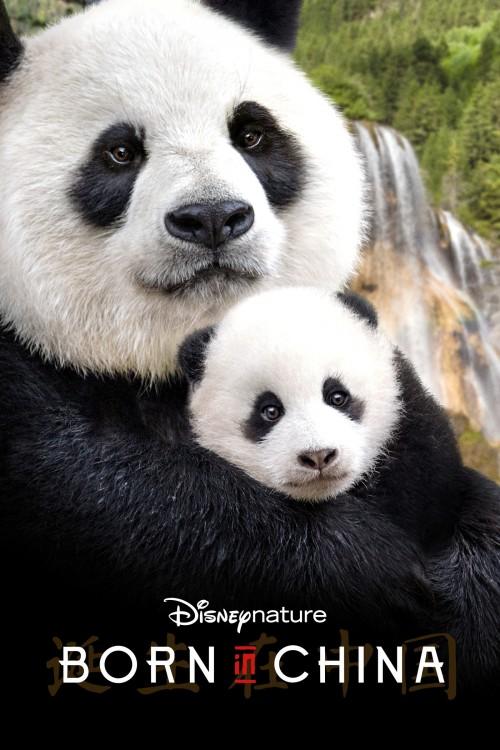 دانلود رایگان مستند Born in China 2016