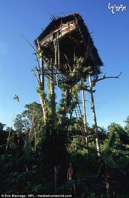 قبیلهای که در خانههای درختی زندگی میکنند