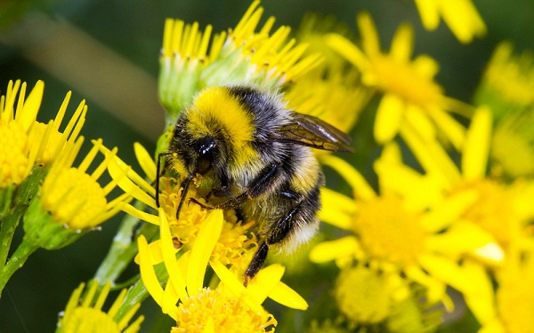 میزان قند مصرفی در کلنی و زنبورهای عسل